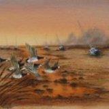 Barnacle Geese- Estuary