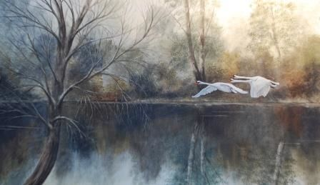 Mute Swans Roath Park