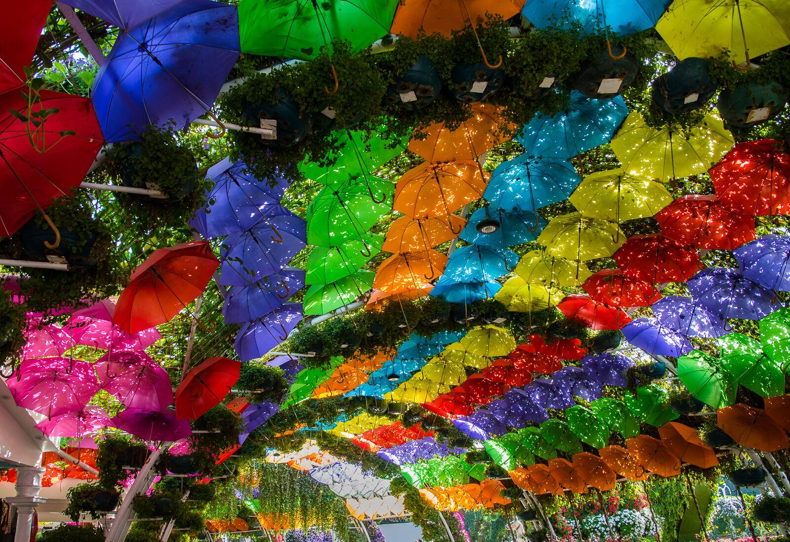 Colours of the rainbow--Neil Raffan--3