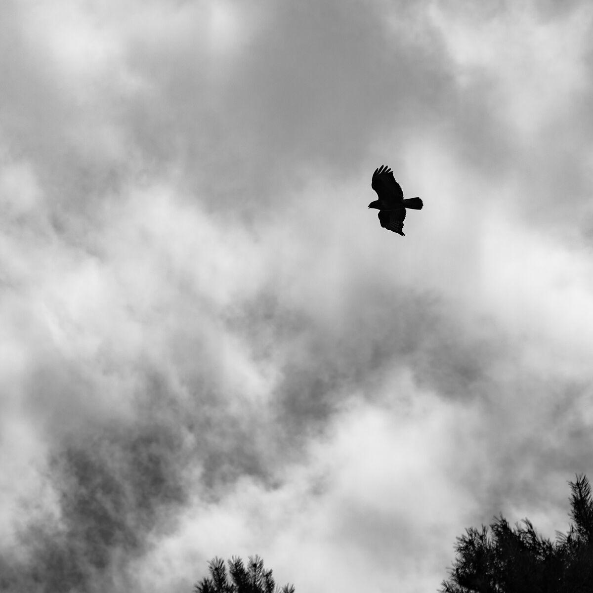 Death from above--Matt Tilford--1-3