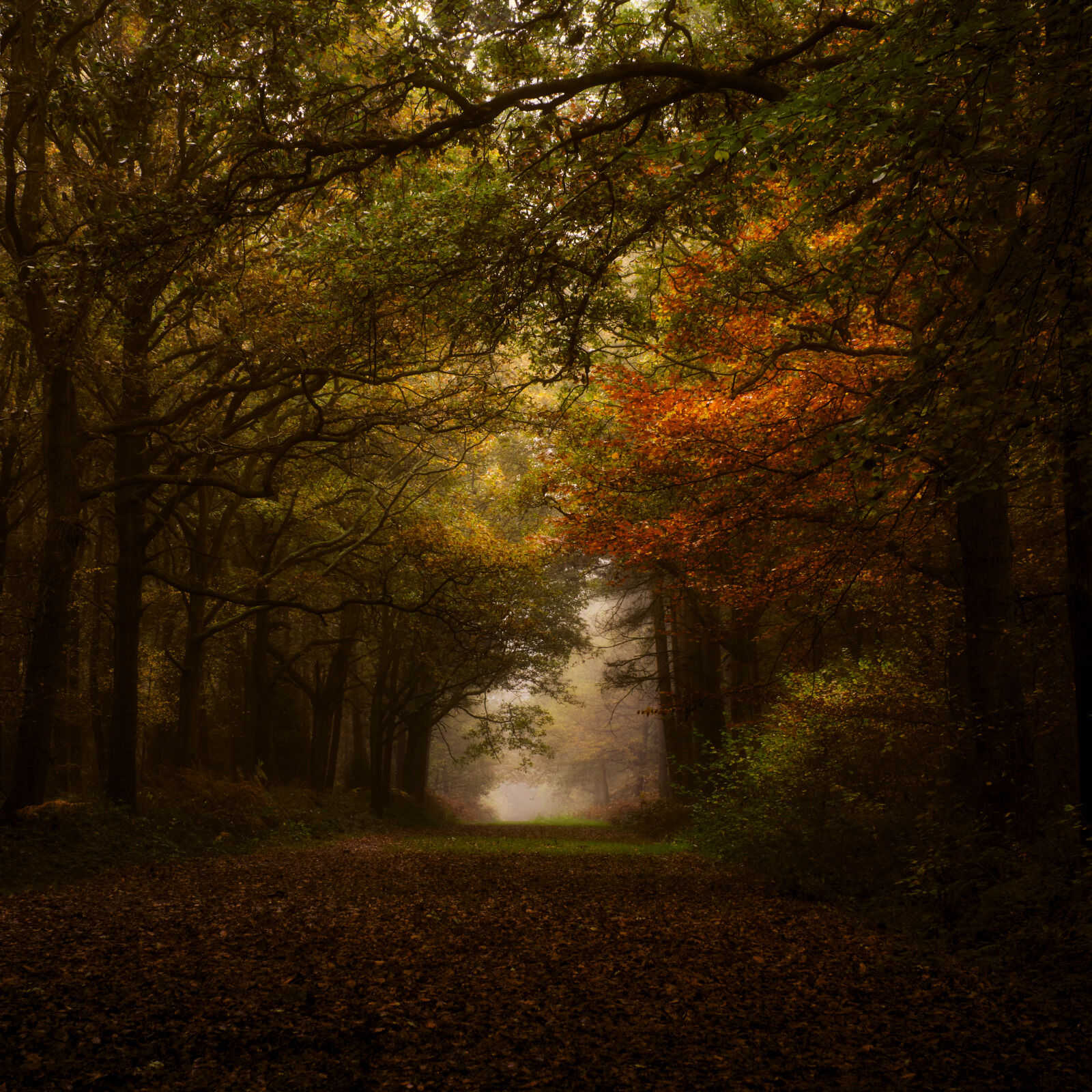 Group A - Highly Commended - Woodland Walk - Andrew Kirkby