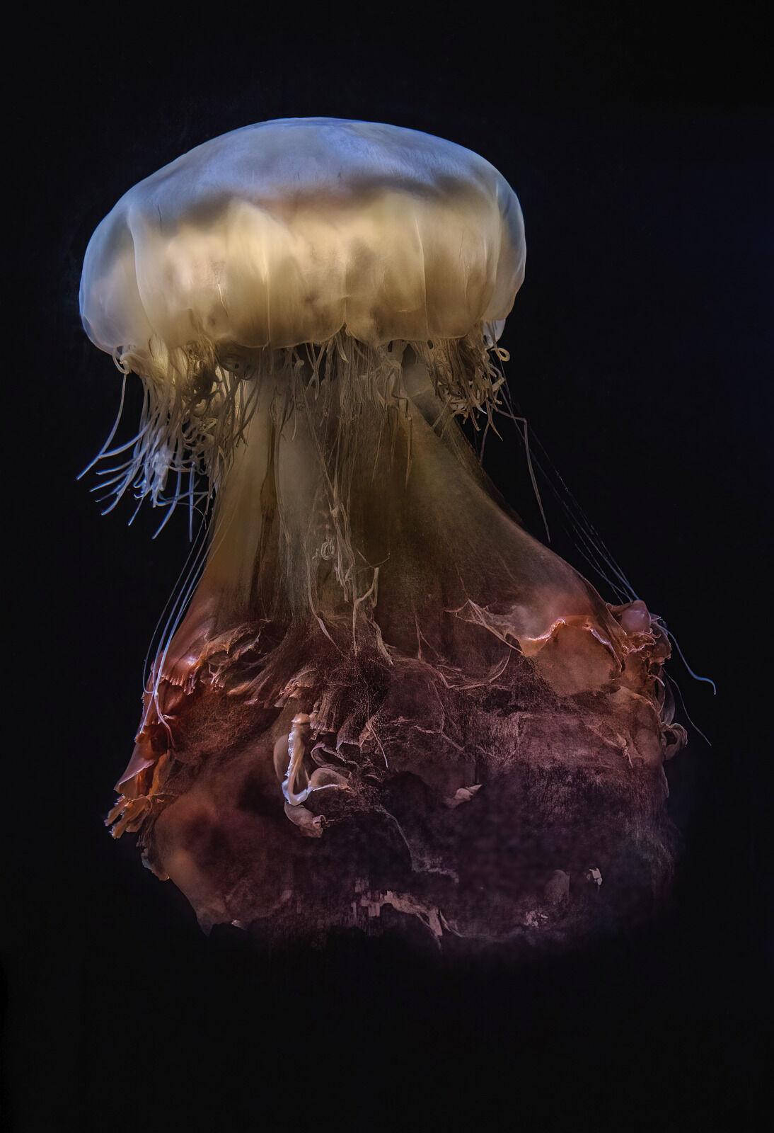 Second - Jellyfish - Martin Janes