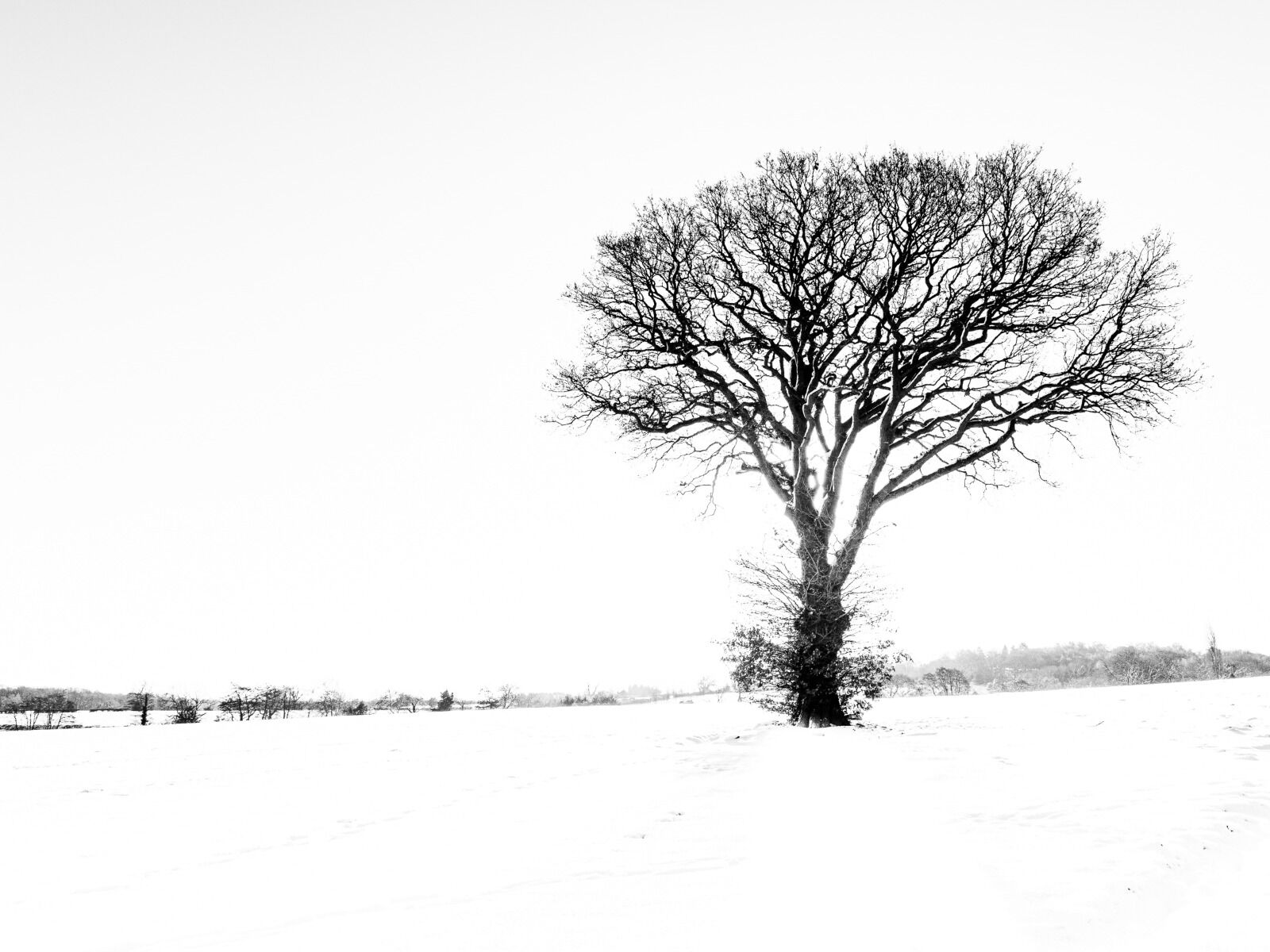 Group B - Highly Commended - Winter Oak - David Walters
