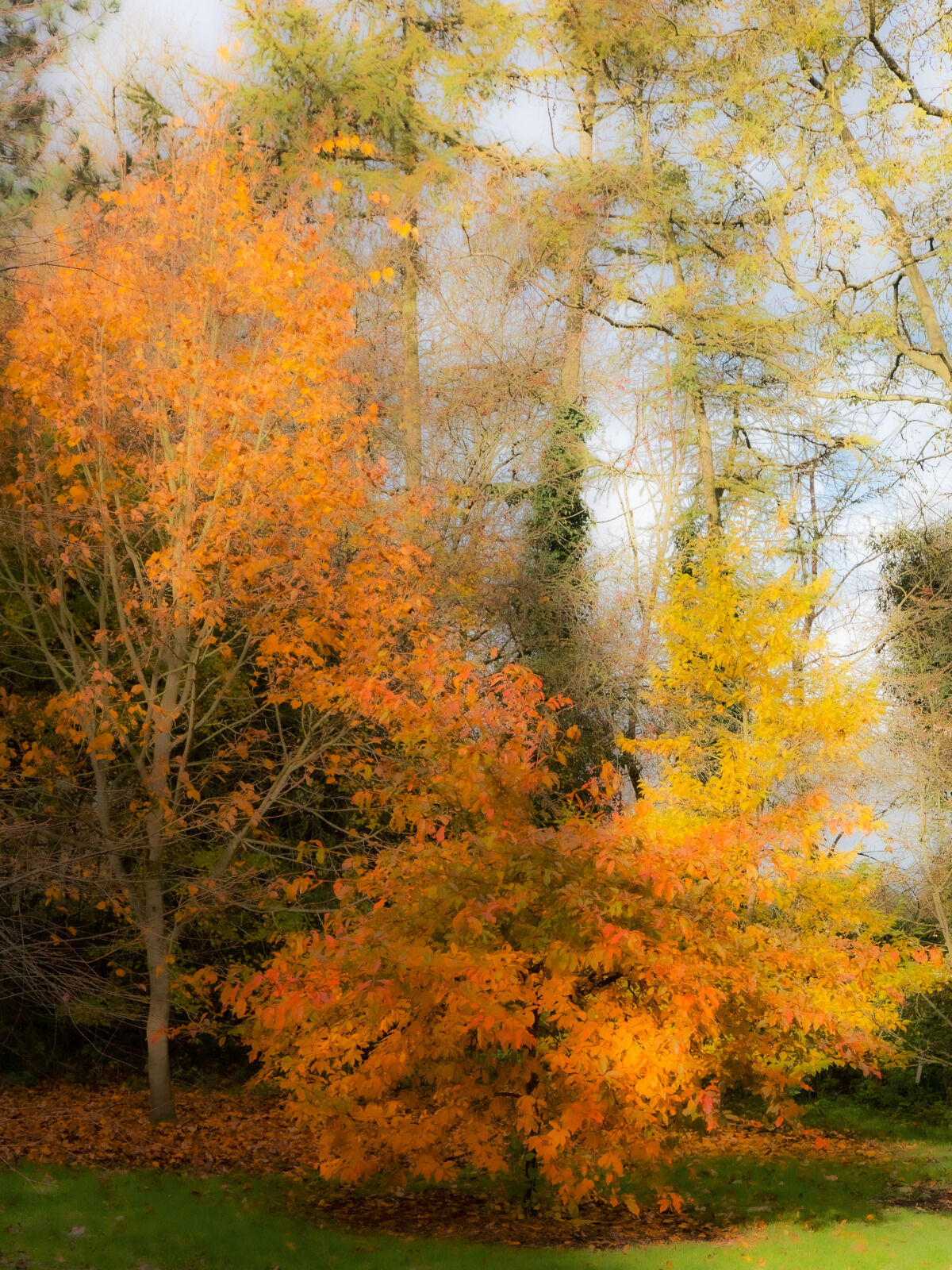 Group B - Commended - Autumn Impressions - David Walters