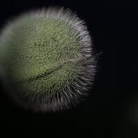 Poppy--Mike Helft--3