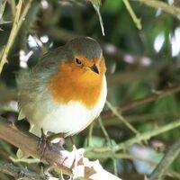 Robin--Frank Lock--3.jpg