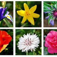 Summer Flowerheads