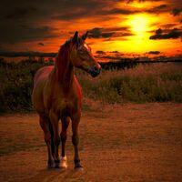 Sun Kissed--Catherine Knee--1