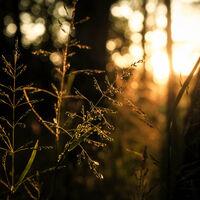Sunset Forest--Grace Kikrby--2