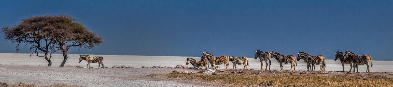 Zebra Crossing - John Whitby