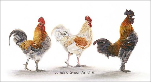 Print taken from a watercolour painting of 2 chickens and 1 cockerel