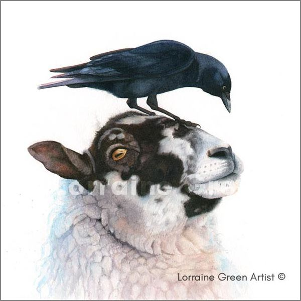 Print from a watercolour painting of a sheep and jackdaw