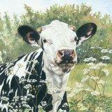 Cow Parsley Friesian Greetings Card