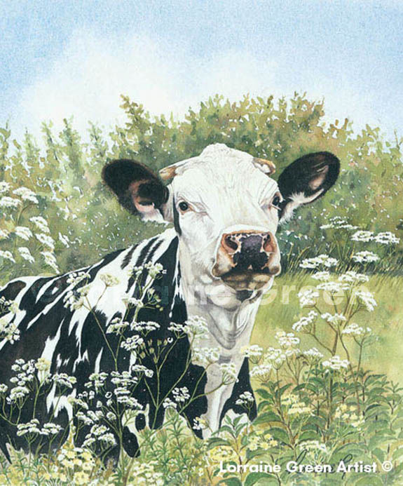 Print taken from a watercolour painting of a Friesian cow