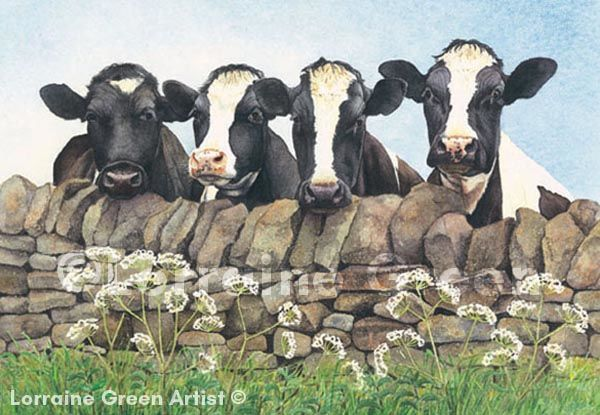 A6 Greetings card featuring 4 friesians looking over a wall