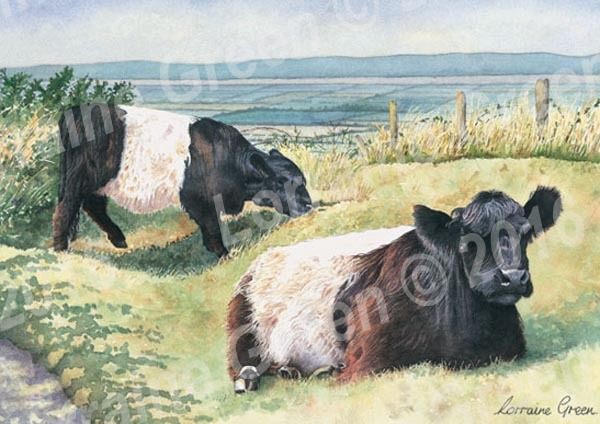 A6 Greetings card featuring 2 Belted Galloway cows