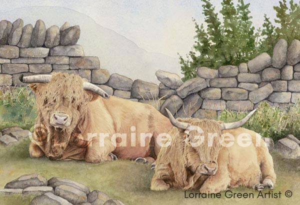 A6 Greetings card featuring 2 Highland cows
