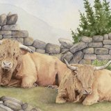 Highland Cattle Greetings Card
