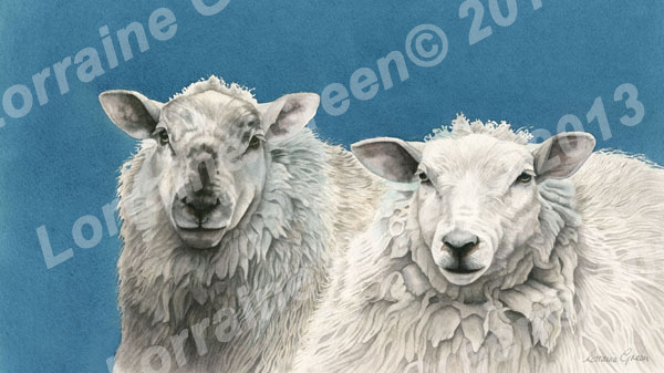 Print taken from a watercolour painting of 2 sheep