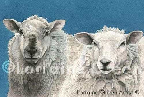 A6 Greetings card featuring 2 Sheep