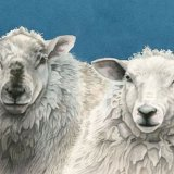 Blue Sheep Greetings Card