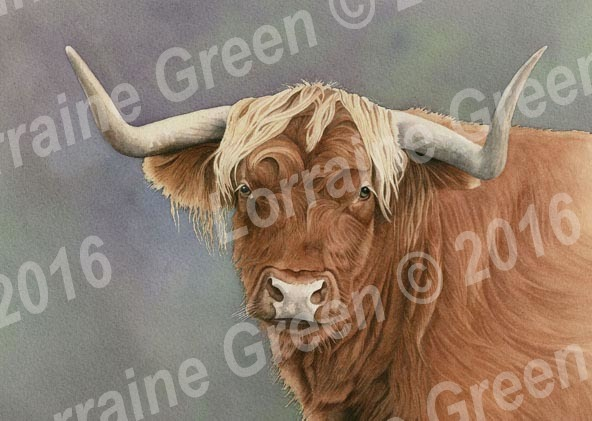 A6 Greetings card featuring a Highland Cow