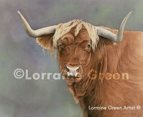 print taken from a watercolour painting of a highland cow