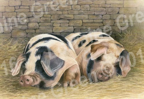 A6 Greetings card featuring 2 Gloucester Old Spot pigs