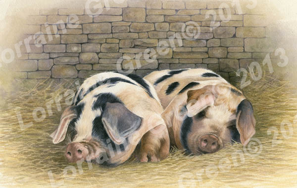 Print taken from a watercolour painting of 2 Gloucester Old Spot pigs