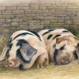 Painswick Pigs