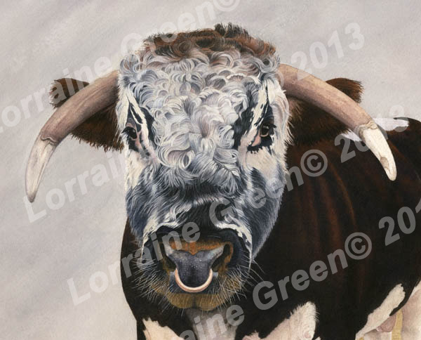 Print taken from a watercolour painting of a Longhorn Bull