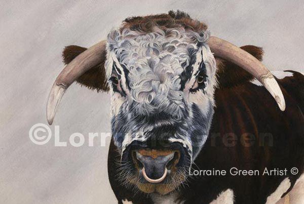 A6 Greetings card featuring a Longhorn Bull