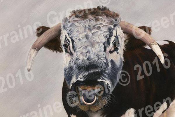 A6 Greetings card featuring a Longhorn Bull