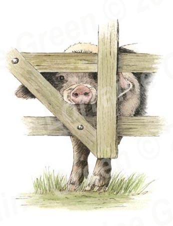 A6 Greetings card featuring a Nosey Gloucester Old Spot pig