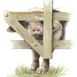 Nosey Porker Greetings Card