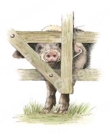 Print taken from a pen and wash picture of a cheeky Gloucester Old Spot pig.