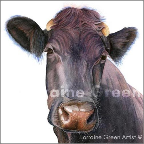 148mm square Greetings card featuring the head of a nosey cow