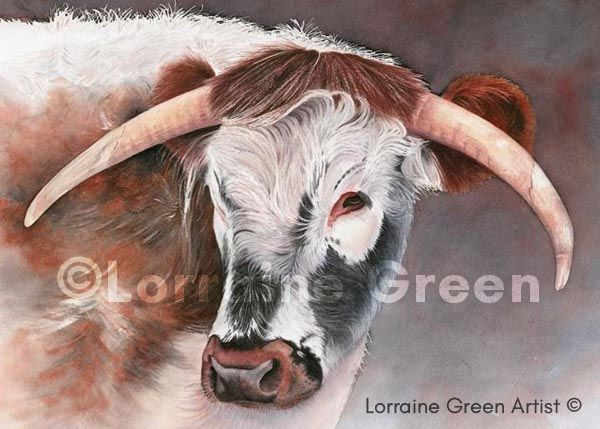 A6 Greetings card featuring a Longhorn cow