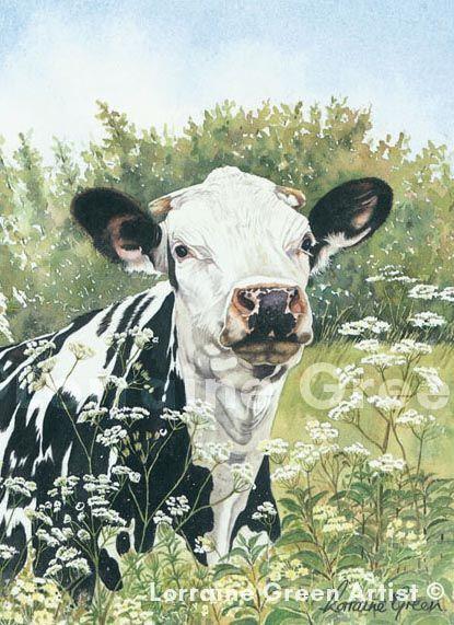 A6 Greetings card featuring a friesian cow - cow parsley friesian