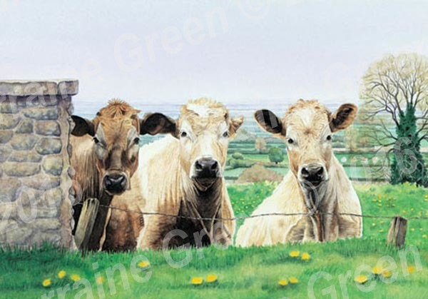 A6 Greetings card featuring 3 cows - the escape committee