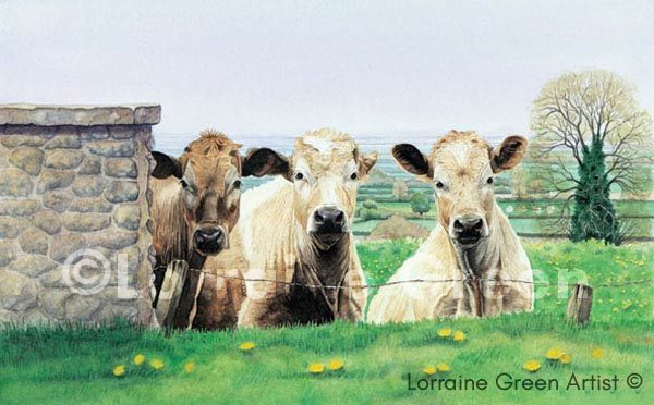 Print taken from a watercolour painting of 3 cows