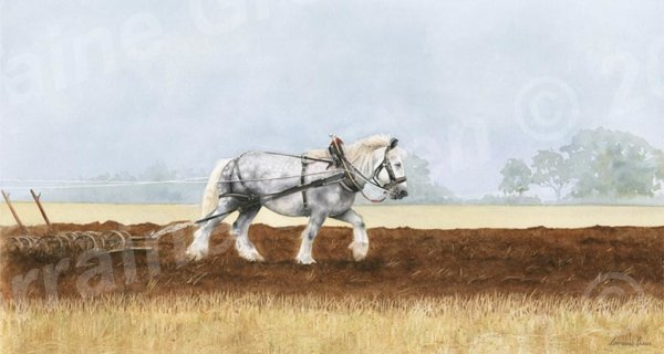 A print taken from a watercolour painting of a dapple grey heavy horse