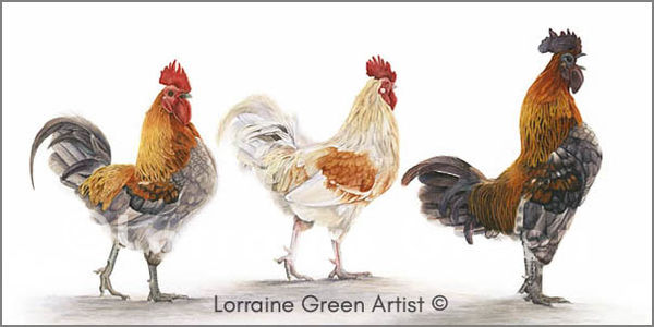 DL Greetings card featuring 2 chickens and 1 cockerel