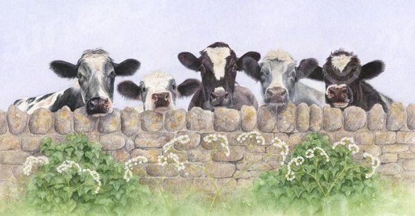 Print taken from a watercolour painting of Five Cows looking over a wall