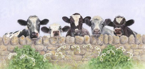 DL Greetings Card featuring five curious cows looking over a wall