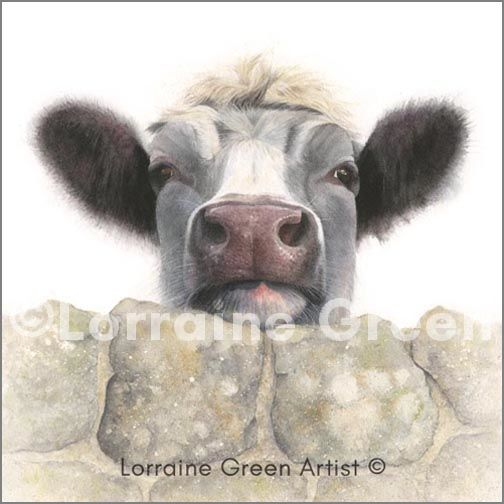 Greetings card showing a cow looking over a wall