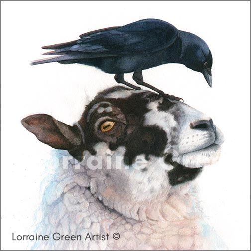 148mm square greetings card featuring a sheep and a jackdaw
