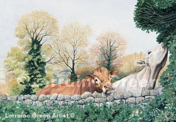 A6 Greetings card featuring a limousin bull and a cow
