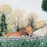 Over The Wall Greetings Card