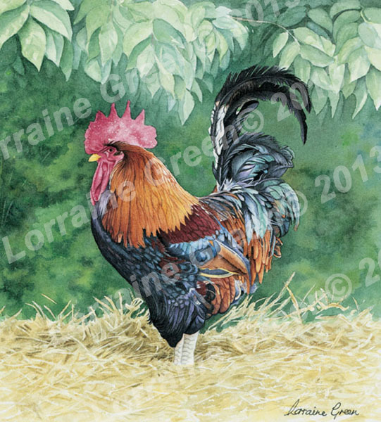 Print taken from a watercolour painting of colourful cockerel